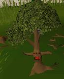 Ent (tree)