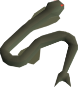 Sacred eel detail