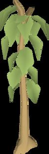 Teak tree