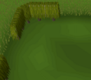 Tall box hedge