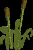 Reeds built.png
