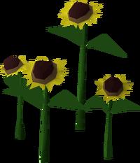 Sunflower built