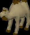 Al the Camel.png