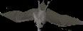 File:Bat.png