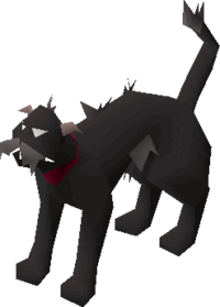 Wily cat (black) pet