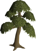 Yew tree built.png