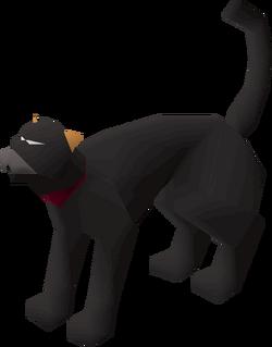 Bob the Jagex cat
