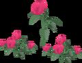 Roses built.png