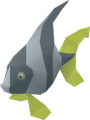 Angel Fish.png