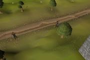 Wilderness ditch