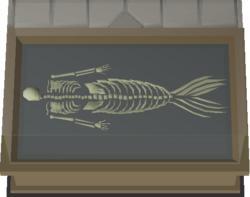 Merfolk Skeleton display