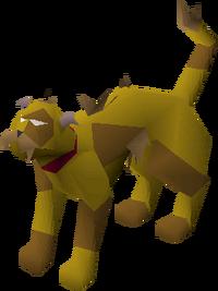 Wily cat (brown) pet