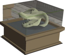 Wyvern skull display