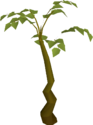 Tall plant built.png