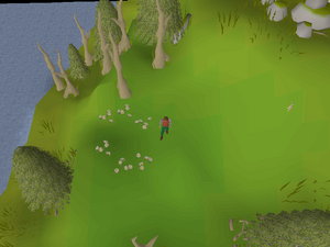 Hot cold clue - North-west of Elf Camp