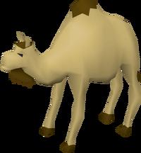 Cam the Camel