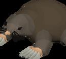 Money making guide/Killing Giant Mole