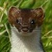 Weas-El's avatar