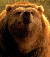 Ava-the-bear-dr-dolittle-2-6.44