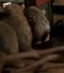 Rat-kids-garfield-the-movie-47.9