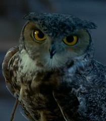 Owl-dr-dolittle-49.4