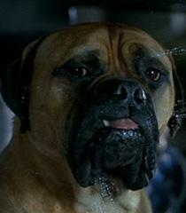 I-love-you-dog-dr-dolittle-0.64