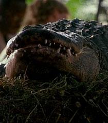 Alligator-dr-dolittle-2-87.2