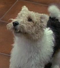 Compulsive-dog-dr-dolittle-29.4