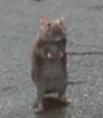 Mom-rat-garfield-the-movie-43.6