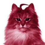 Marena Resu-tan's avatar