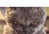 Rocketmanwikia's avatar