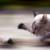 Oldgreycat
