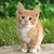 Scratchcat520