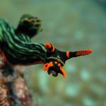 Viperfish2000
