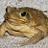 Delixer's avatar