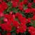 Redflower02