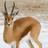 Graycloud64's avatar