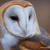 Owlfang33