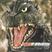 Meowjar's avatar
