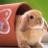 Kerberos2001's avatar