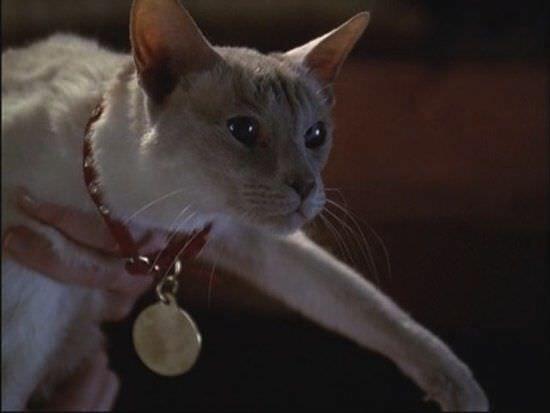 cat in Charmed