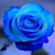 RosestarOakclan