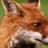 RockyEcoPup19's avatar