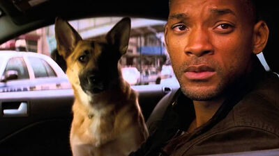 5 Great Man & Dog Movies