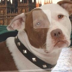 Arnold, the Holts pitbull, also considered a sixth member of their family