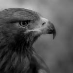EagleCrafting