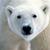 Polarbear9595