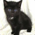 Blacktomcat1