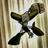 Zelta mega's avatar