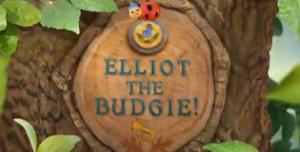 Elliot the Budgie!